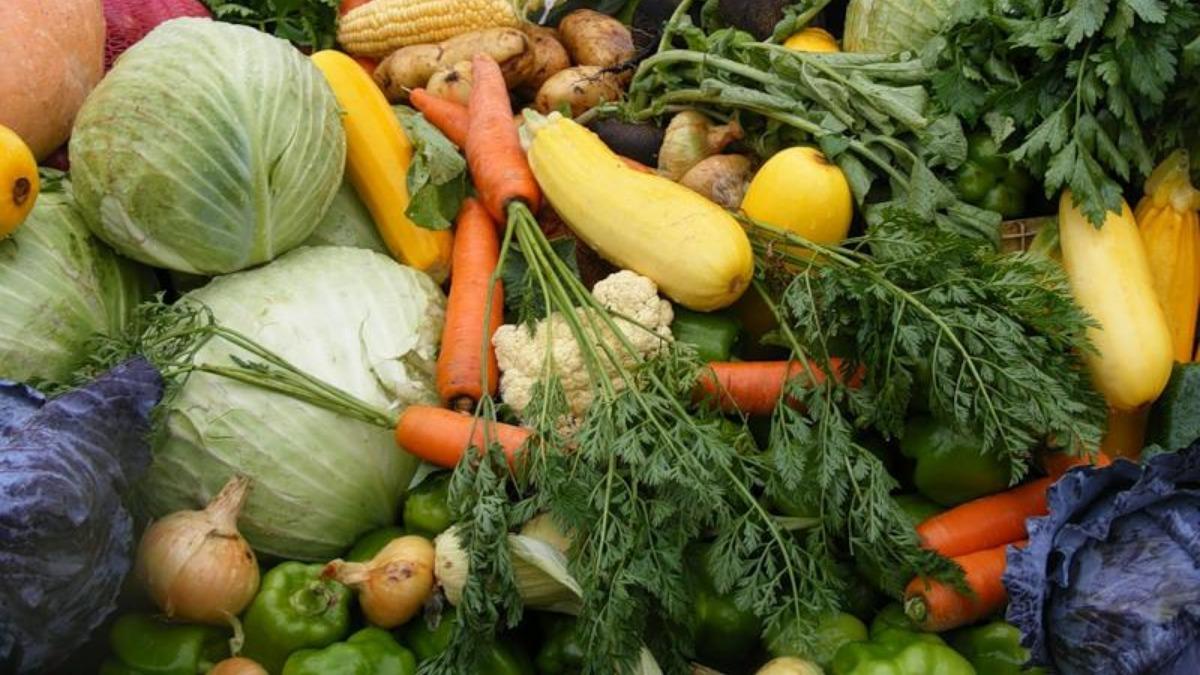 Картинка сбор овощей